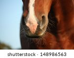 close up of chestnut horse nose | Shutterstock . vector #148986563