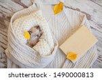 Stock photo kitten sleep on knitted plaid little cut cat at home autumn fall 1490000813