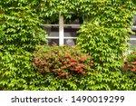 Green Facade Of A House Grown...