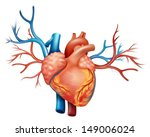 illustration showing the heart | Shutterstock .eps vector #149006024