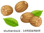 set nutmeg and leaf. isolated...   Shutterstock .eps vector #1490069849