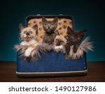 Suitcase Full Of Kittens In A...