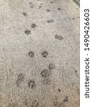 Dog paw prints in cement sidwalk