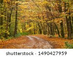Autumn Forest Trail With...