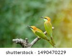 Stock photo beautiful bird chestnut headed bee eater on a branch merops leschenaulti with green background 1490470229