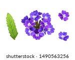 Set Of Purple Verbena Flowers...