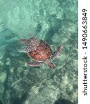 Sea Turtles Are Characterized...