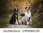 Portrait Of Three Dog Friends...