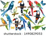 Stock photo large set of tropical birds on an isolated white background watercolor illustration long tailed 1490829053