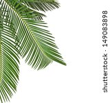 border of palm leaves close up  ... | Shutterstock . vector #149083898