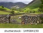 Chickens And Sheep At Wasdale...