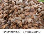 Closeup coconut spathe fiber...