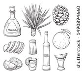 tequila ingredients hand drawn... | Shutterstock .eps vector #1490894660