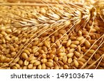 wheat grains and ears as... | Shutterstock . vector #149103674