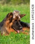 Stock photo german shepherd dog with little kitten on its head 149121428