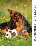 Stock photo german shepherd dog and little kittens 149121434