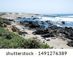 Elephant Seal  View Point In...