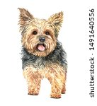 Yorkshire Terrier Of A Dog....