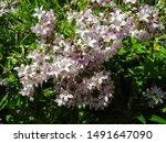 Soft Pink  Bell Shaped Flowers...