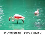 beautiful flamingos on the... | Shutterstock . vector #1491648350