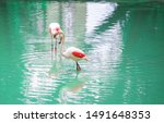 beautiful flamingos on the... | Shutterstock . vector #1491648353