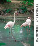 beautiful flamingos on the... | Shutterstock . vector #1491648356