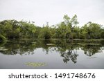 Cypress and tupelo gum trees at Merchants Millpond State Park