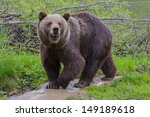 a cute brown bear sniffing | Shutterstock . vector #149189618
