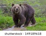 a cute brown bear sniffing | Shutterstock . vector #149189618