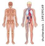 human anatomy. set of vector... | Shutterstock .eps vector #149199149