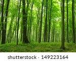 trees in a green forest in... | Shutterstock . vector #149223164