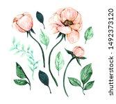 floral elements for design. set ...   Shutterstock . vector #1492373120