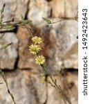 corfu  greece   flora and fauna ... | Shutterstock . vector #1492423643