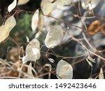 corfu  greece   flora and fauna ... | Shutterstock . vector #1492423646