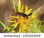 corfu  greece   flora and fauna ... | Shutterstock . vector #1492423649