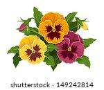 pansy flowers. vector... | Shutterstock .eps vector #149242814