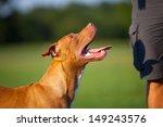 Stock photo  pit bull terrier 149243576