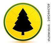 Evergreen Conifer Pine Tree...