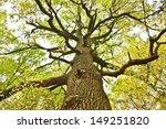 big old oak tree in the autumn... | Shutterstock . vector #149251820