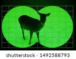 Wild deer on snow - view through night vision - stock photo