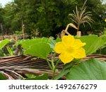 yellow flower in garden... | Shutterstock . vector #1492676279