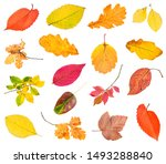 Various Fallen Leaves And Twigs ...
