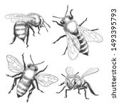 bee engravings. honey bee... | Shutterstock .eps vector #1493395793