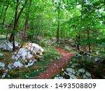 Dirt Path Under Svinjak...
