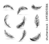 isolated and realistic feather... | Shutterstock .eps vector #1493805086