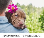 Stock photo pretty puppy of chocolate color and his caring owner on a background of blue sky green trees on a 1493806073