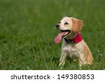 Stock photo small cute dog sitting in grass 149380853