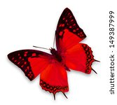 Stock photo red butterfly isolated on white background 149387999