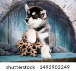 Stock photo alaskan malamute puppy black and white puppy with long fluffy hair 1493903249
