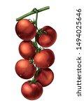 antique engraving illustration... | Shutterstock . vector #1494025646